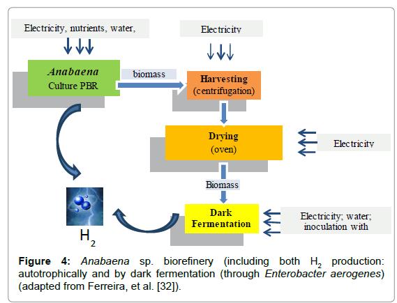 oceanography-dark-fermentation