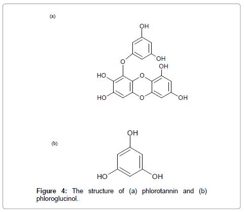 oceanography-structure-phlorotannin