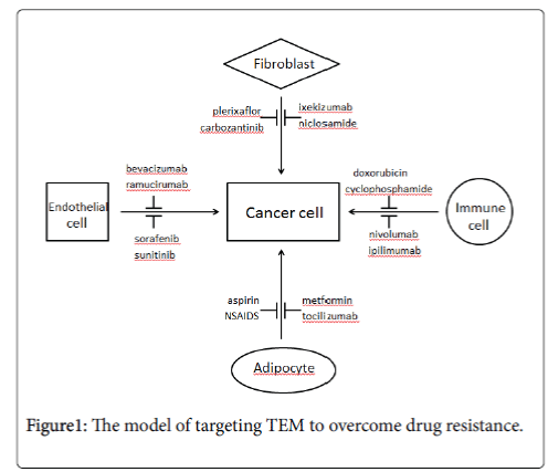 oncology-translational-research-targeting-TEM-overcome