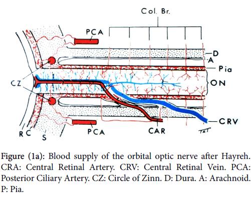 optometry-Blood-supply-orbital