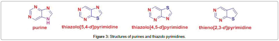 organic-chemistry-current-research-purines-thiazolo