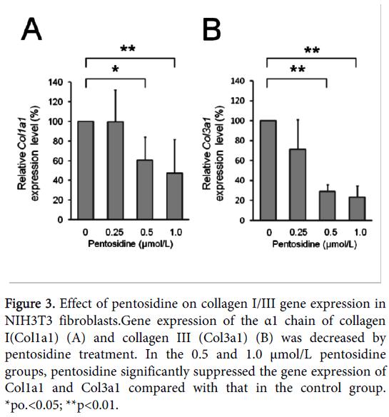 orthopedic-muscular-system-pentosidine-fibroblasts-collagen