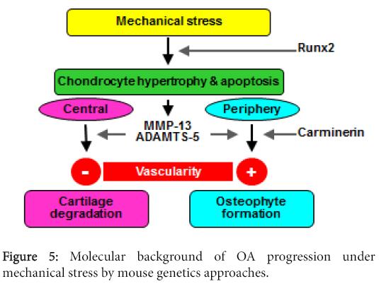 osteoarthritis-Molecular-background-OA-progression