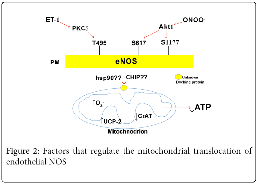 pediatrics-therapeutics-mitochondrial