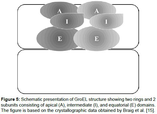 pharmaceutica-analytica-acta-GroEL-structure