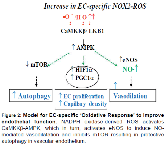 pharmaceutica-analytica-acta-Model-EC-specific