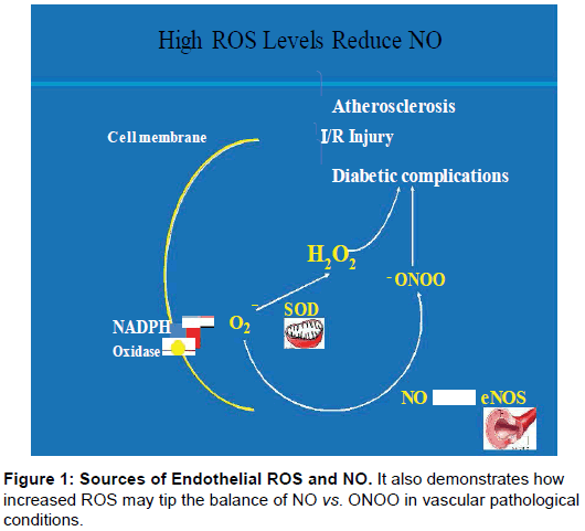 pharmaceutica-analytica-acta-Sources-Endothelial
