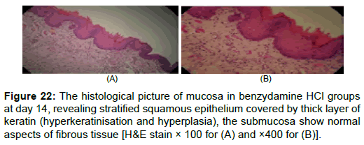 pharmaceutica-analytica-acta-histological-picture-mucosa