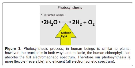 pharmaceutica-analytica-acta-human-chlorophyll