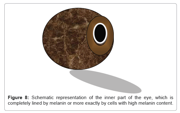 pharmaceutica-analytica-acta-melanin-content