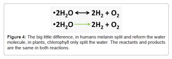 pharmaceutica-analytica-acta-melanin-split