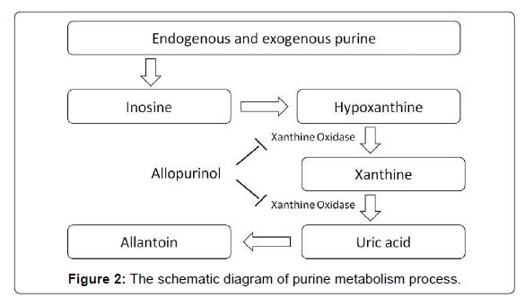 pharmaceutica-analytica-acta-purine-metabolism
