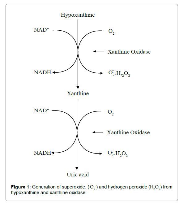 pharmaceutica-analytica-acta-xanthine-oxidase