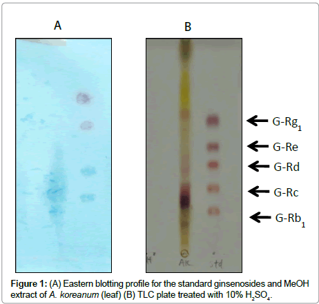 pharmaceutical-analytical-chemistry-Eastern-blotting