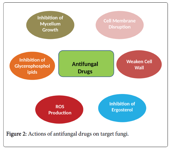 pharmacogenomics-pharmacoproteomics-target-fungi