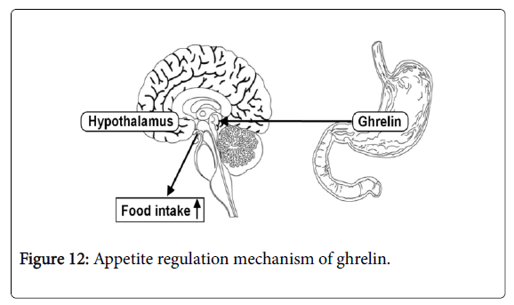 pharmacognosy-natural-products-mechanism-ghrelin