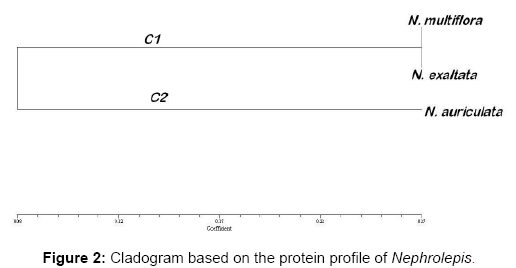 pharmacognosy-natural-products-protein-profile-Nephrolepis