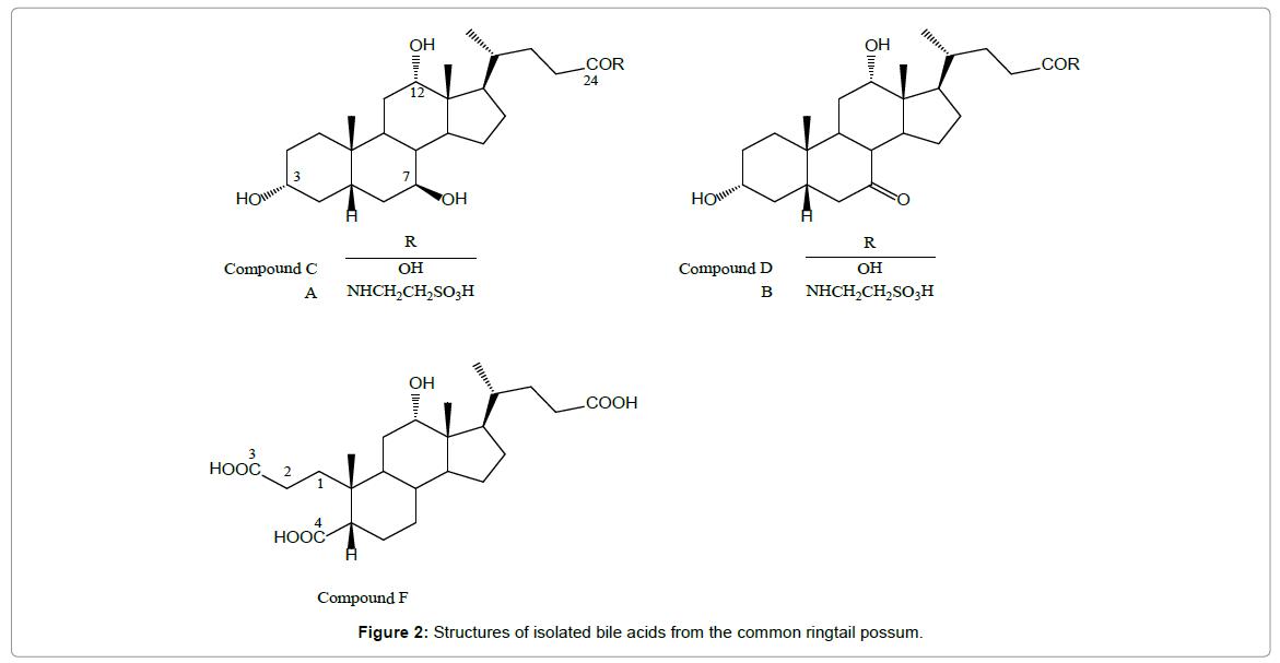 pharmacognosy-natural-products-ringtail-possum