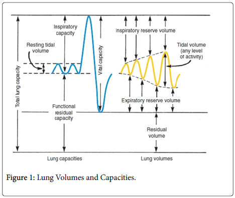 phonetics-audiology-Lung-Volumes