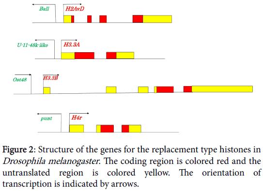 phylogenetics-evolutionary-biology-Drosophila-melanogaster