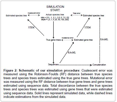 phylogenetics-evolutionary-biology-Robinson-Foulds