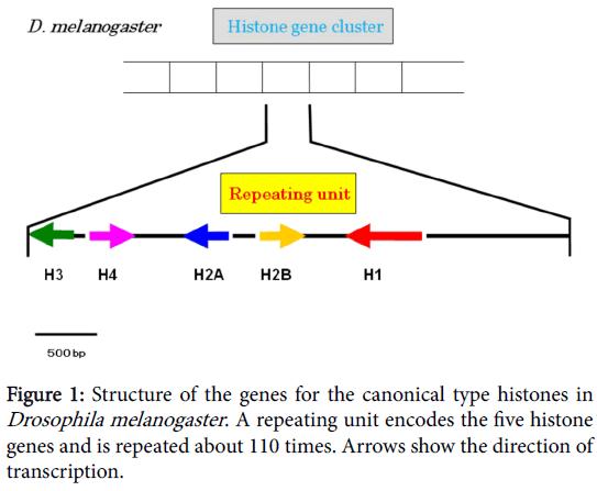 phylogenetics-evolutionary-biology-canonical-type-histones