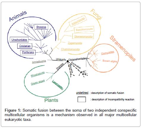 phylogenetics-evolutionary-biology-independent-conspecific