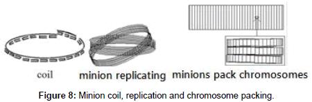 Minion-coil