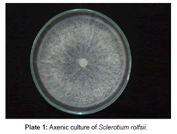 plant-pathology-microbiology-Axenic-culture