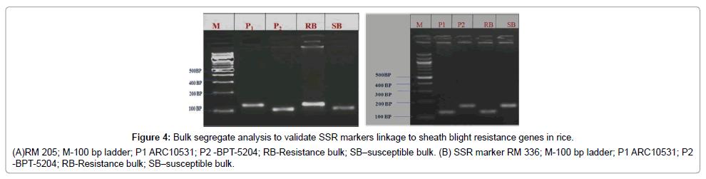plant-pathology-microbiology-Bulk-segregate