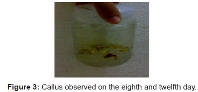 plant-pathology-microbiology-Callus-eighth-twelfth
