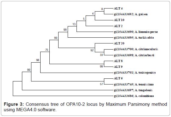 plant-pathology-microbiology-Consensus-Maximum-Parsimony