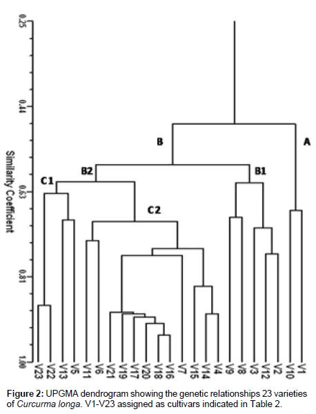 plant-pathology-microbiology-Curcurma-longa