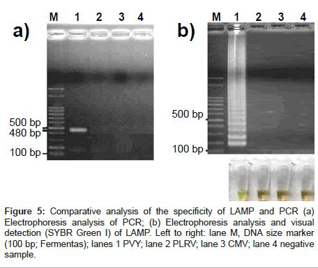 plant-pathology-microbiology-Electrophoresis-analysis