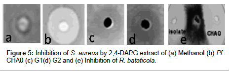 plant-pathology-microbiology-Inhibition-bataticola