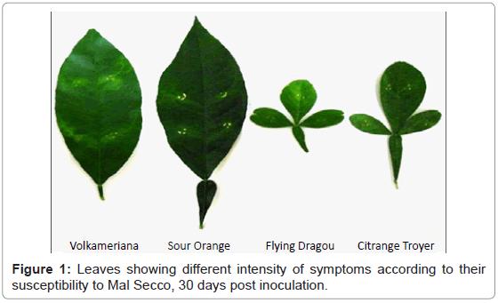 plant-pathology-microbiology-Leaves-intensity-symptoms