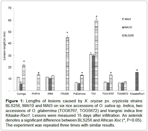 plant-pathology-microbiology-Lengths-lesions-strains