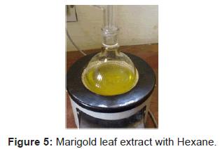 plant-pathology-microbiology-Marigold-leaf-extract