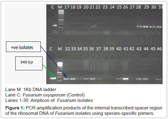 plant-pathology-microbiology-PCR-amplification-internal