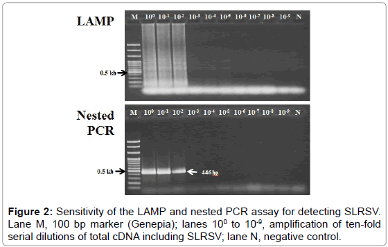 plant-pathology-microbiology-Sensitivity-LAMP-nested