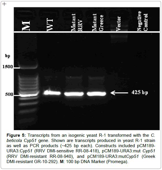 plant-pathology-microbiology-Transcripts-isogenic-yeast