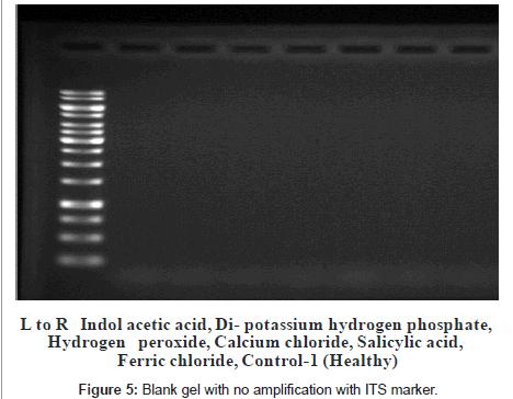 plant-pathology-microbiology-amplification