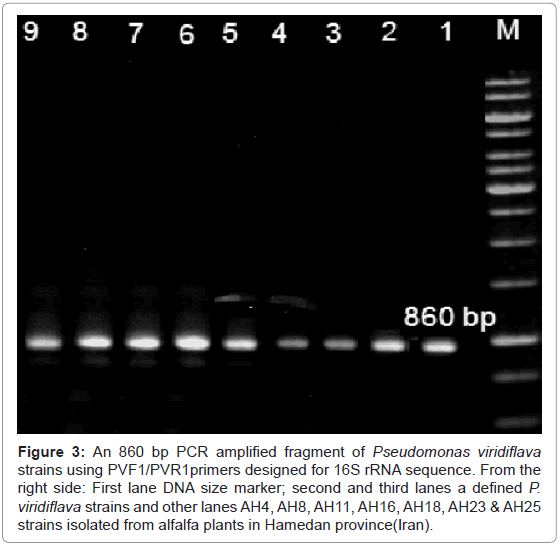 plant-pathology-microbiology-amplified-fragment-Pseudomonas