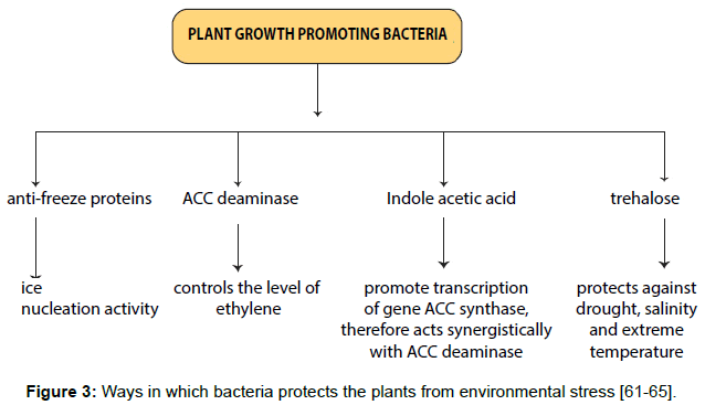 plant-pathology-microbiology-bacteria-protects-plants