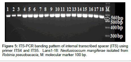 plant-pathology-microbiology-banding-pattern