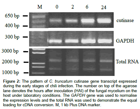 plant-pathology-microbiology-cutinase-gene-transcript