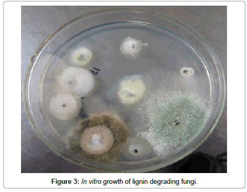 plant-pathology-microbiology-degrading-fungi