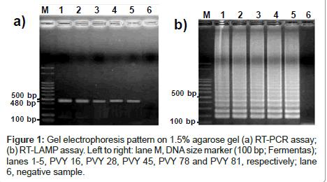 plant-pathology-microbiology-electrophoresis-pattern