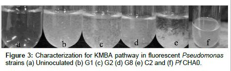 plant-pathology-microbiology-fluorescent-Pseudomonas
