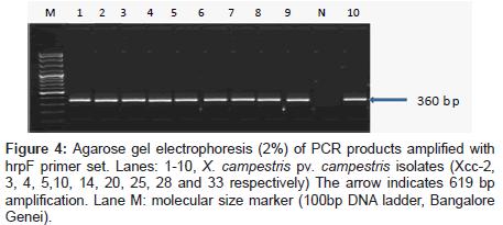 plant-pathology-microbiology-gel-electrophoresis